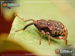 Tips To Keep Insects Out Of the House